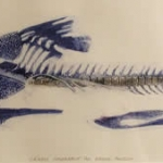 old-museum-fish