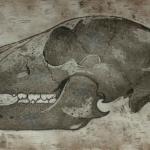 bear-skull