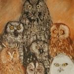 seven-owls-from-bergen